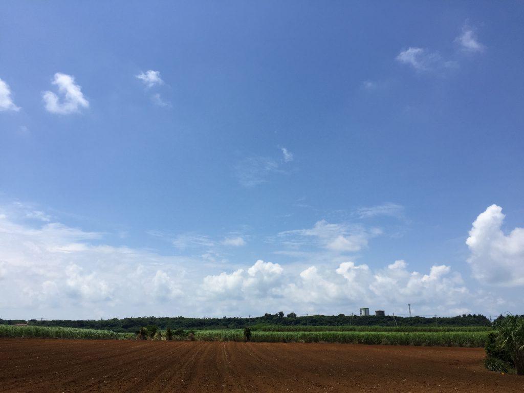 宮古島の畑