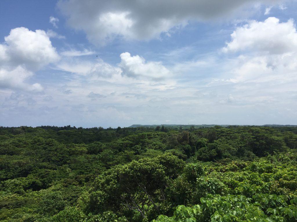 宮古島市熱帯植物園の展望デッキ