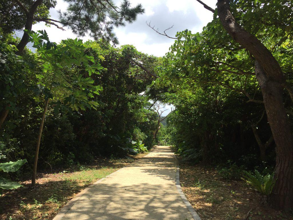 宮古島市熱帯植物園の道
