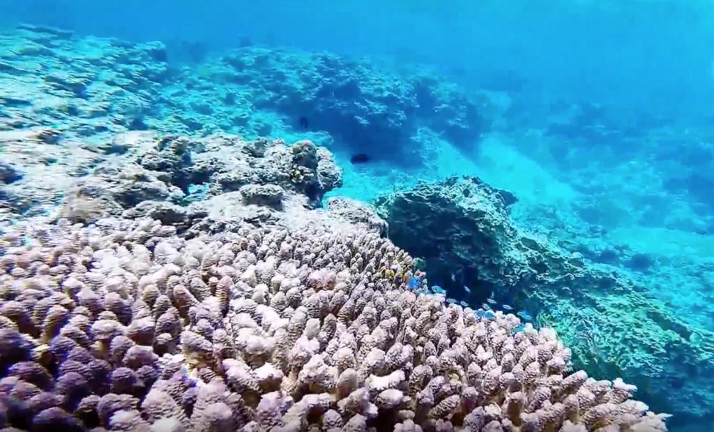 goproの水中映像