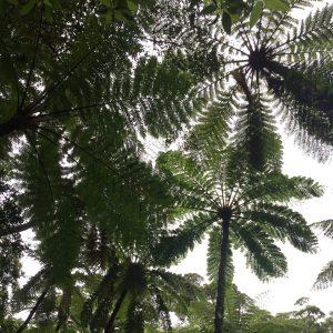 奄美大島で金作原原生林のツアーが凄かった件