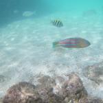 格安アクションカメラのMUSON(ムソン)MC2で水中を撮影してみた