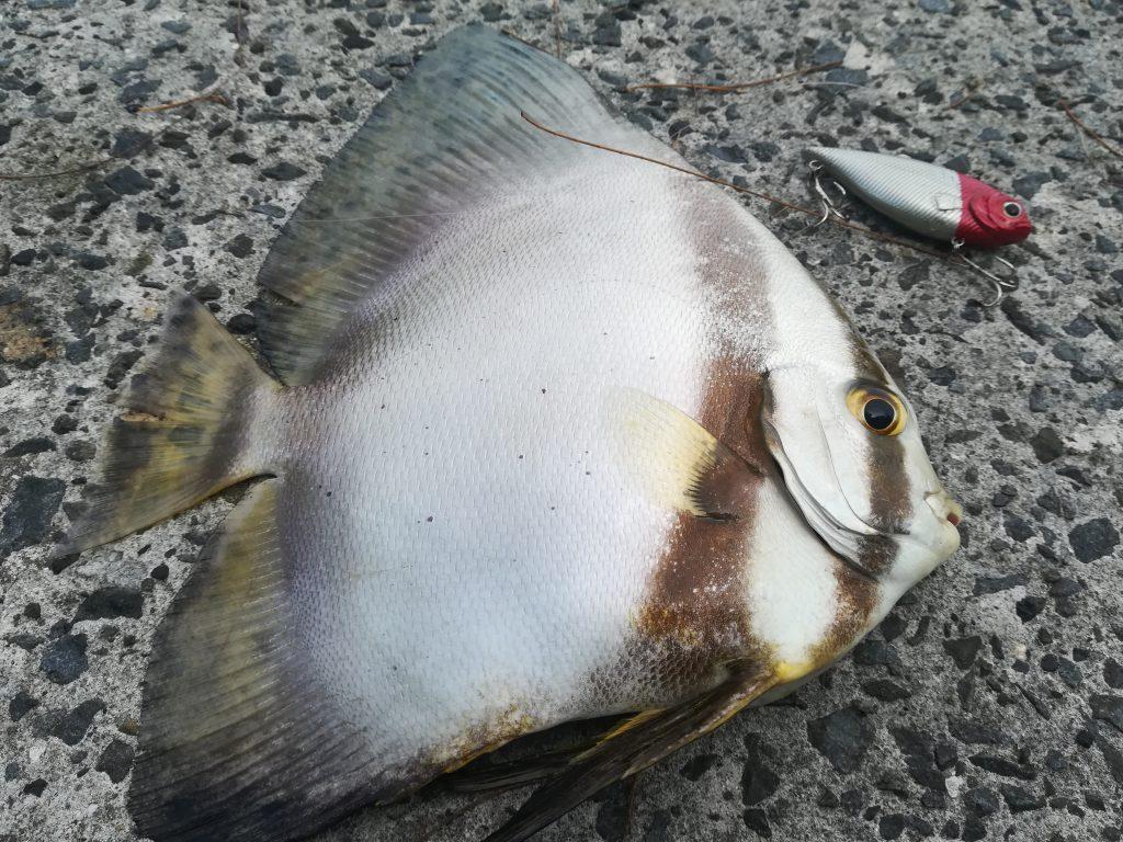 奄美大島の魚