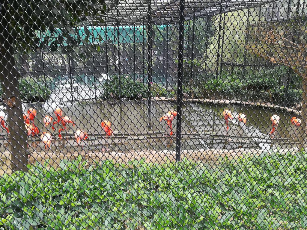 香港動植物公園8