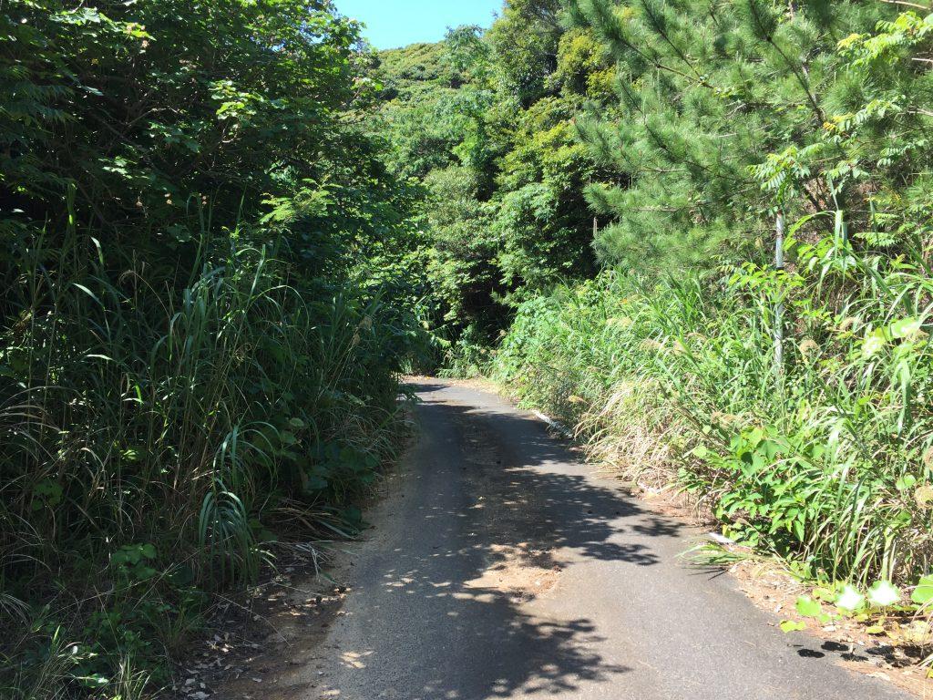 加計呂麻島の南側2