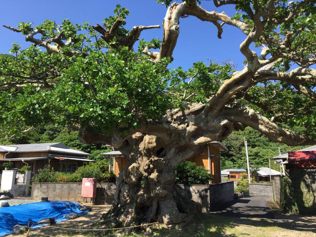 加計呂麻島の南側3