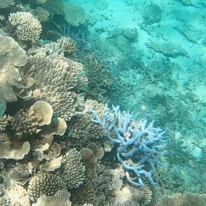 GoProのHERO6で奄美大島の海(水中)を撮影してみた