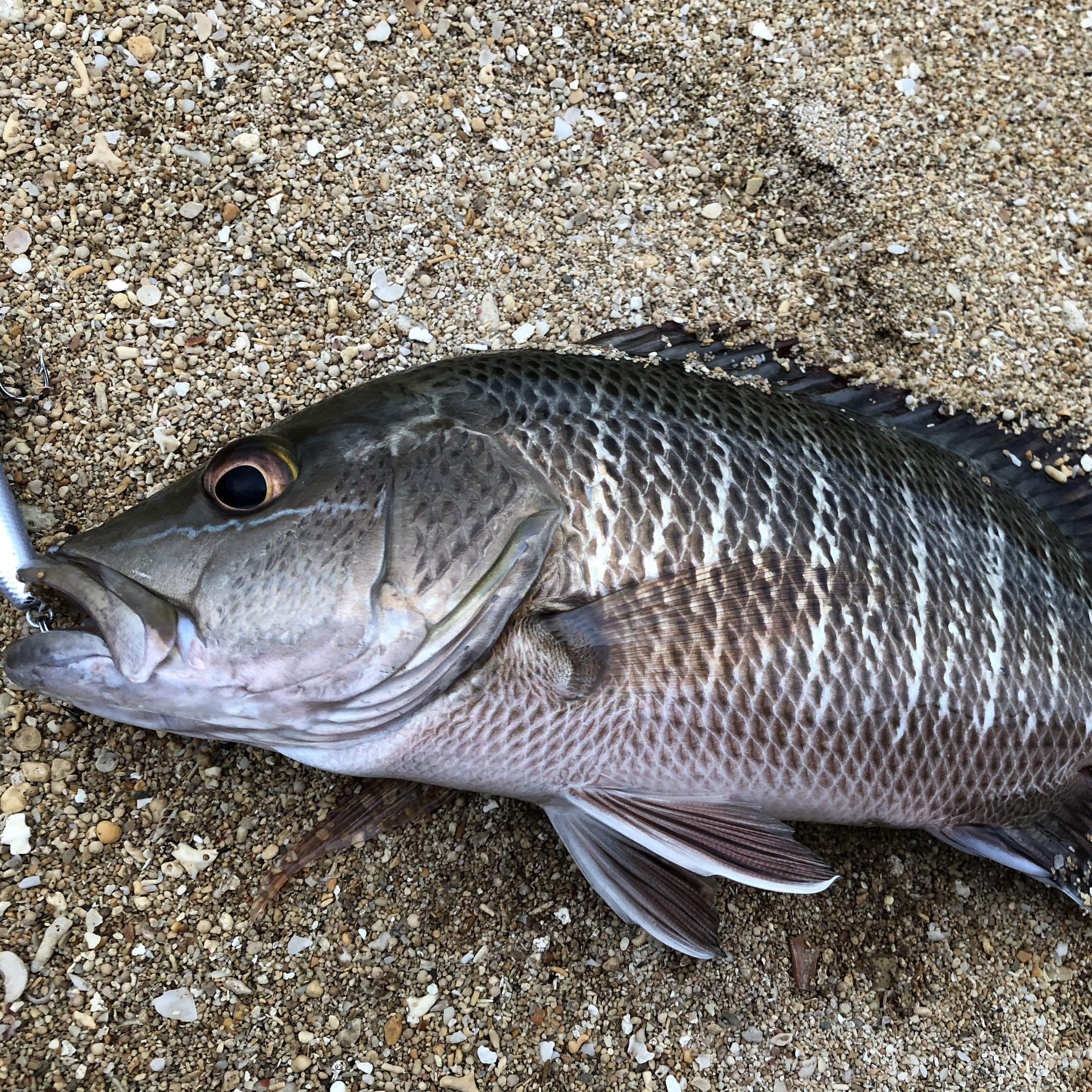 石垣島でのルアー釣り20