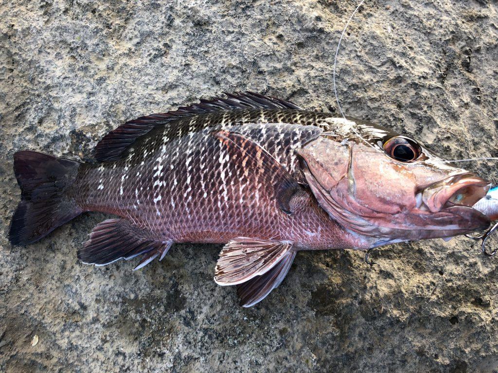 石垣島でのルアー釣り5