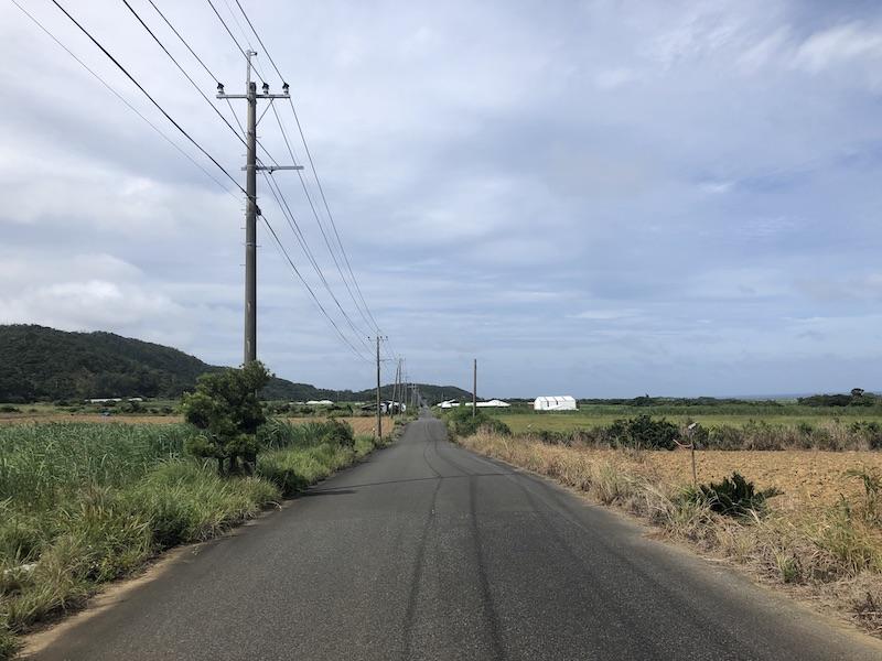 奄美大島のサトウキビ畑
