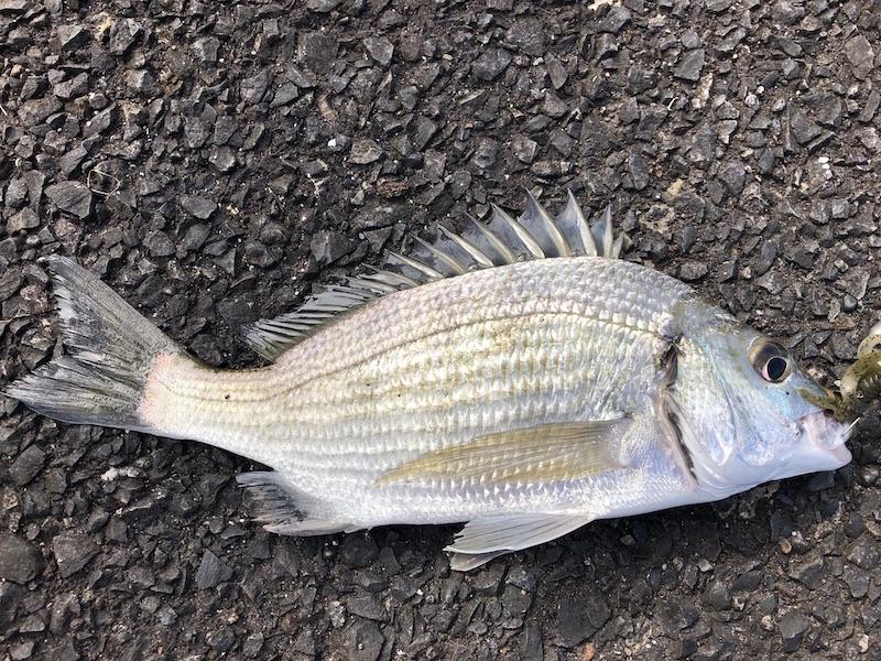 奄美大島の釣り旅行記【2020年10月】