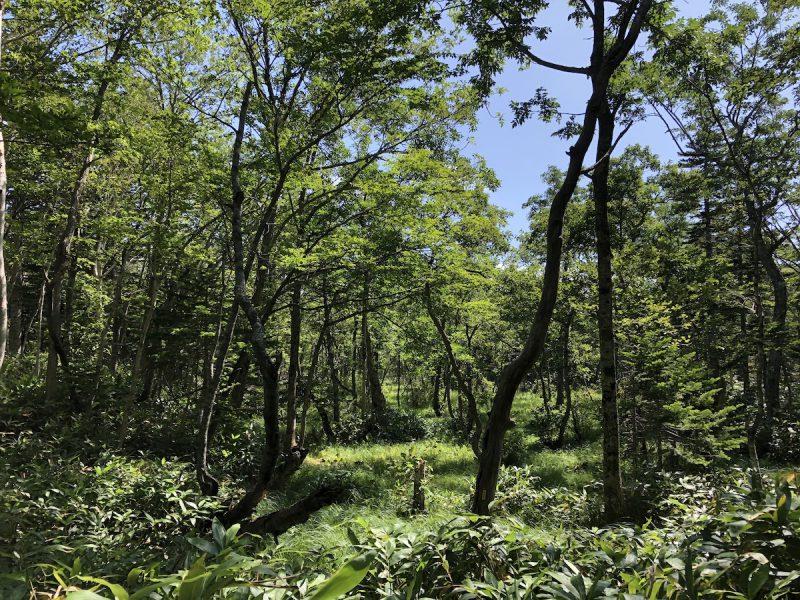 【2021年8月】釧路・知床のグルメ旅行記4日間の2日目